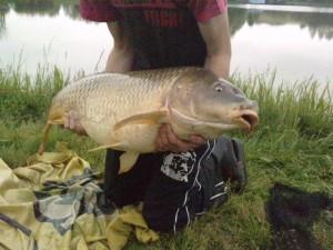 karp135 kg